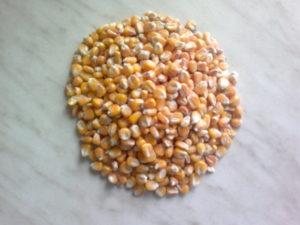 Maiskörner